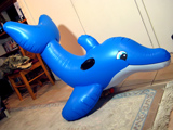 Blue Curved Dolphin